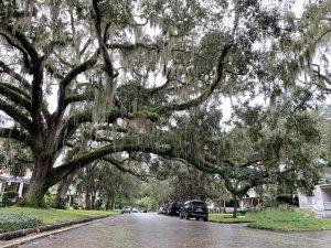 600th block of Magnolia Avenue sweeping live oaks and cobblestone streets